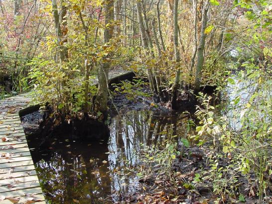 swamp_trail